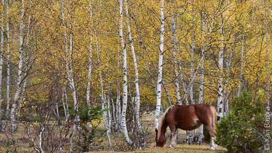 Cavall © Xavi Basora