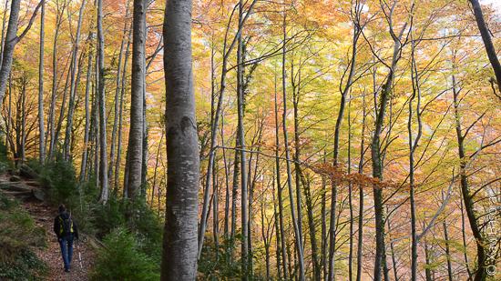 Colors de tardor en una fageda de la Garrotxa. © Xavi Basora
