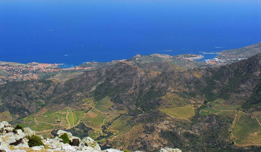 Ruta de vinyes La Costa Vermella
