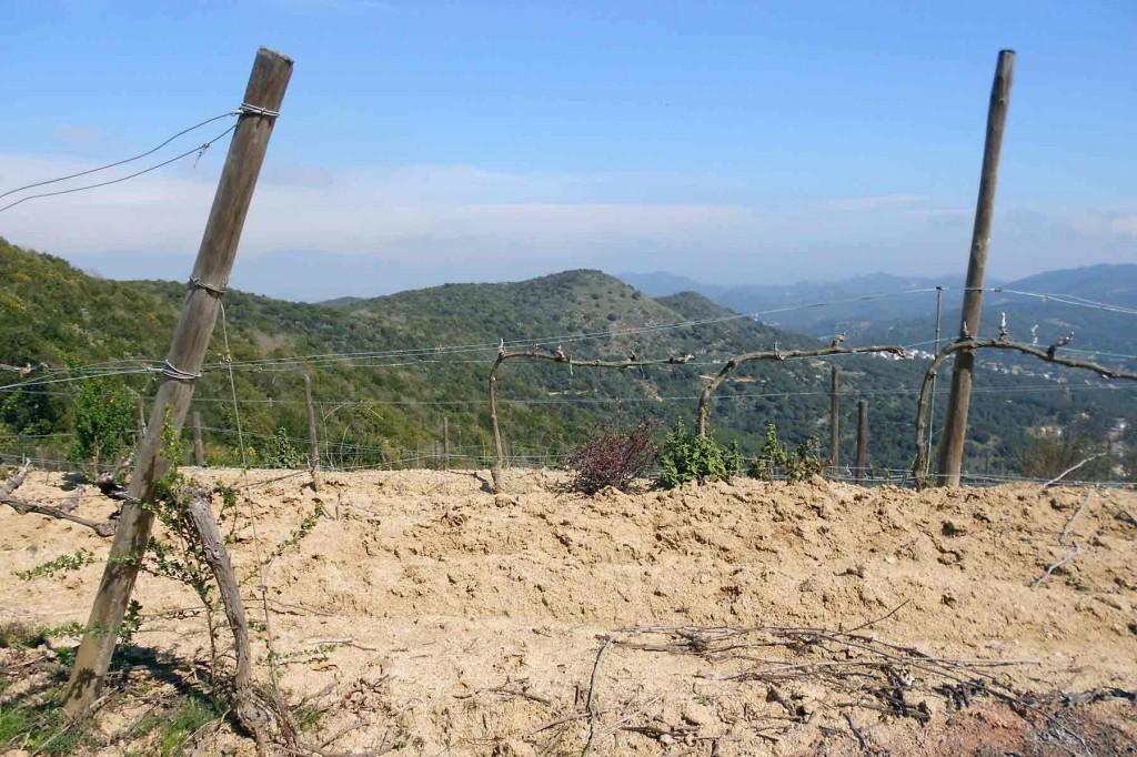 Ruta DO Alella, el punt més alt