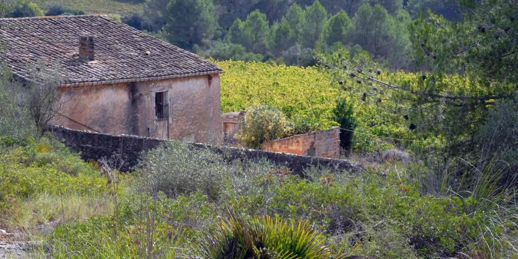 La vinya de can Mercader Olivella Garraf