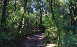 De camí cap el dolmen de ca l'Arenes