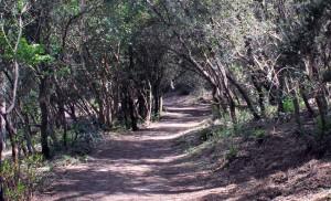 Camí de retorn al Santuari