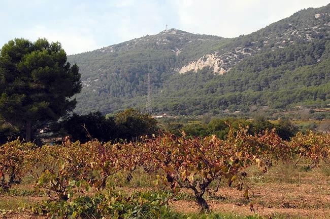 Ruta del Puig de Àguila Garraf