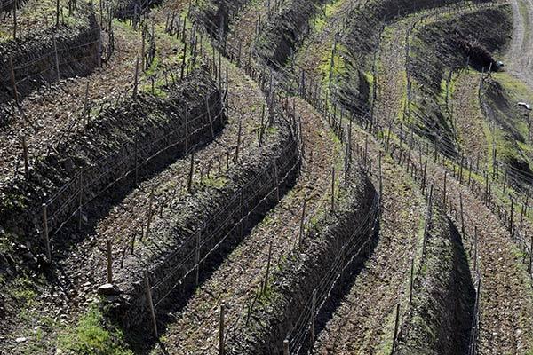 Vinya en terrasses Priorat